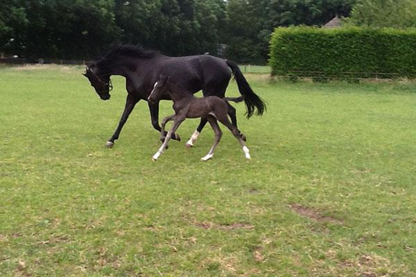 Moondance with his mother Hindevrouwe